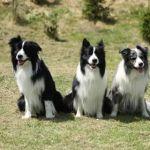 rodina Royal Fellow - Basty, táta Dasty, Bilbo