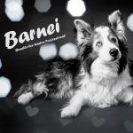 Barnei
